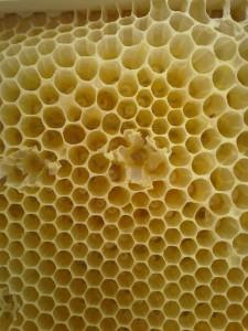 panla de abejas